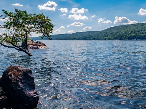 Greenwood Lake Update